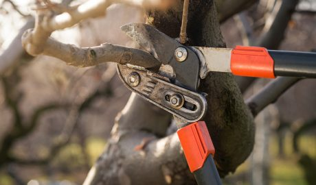 tree pruning services in ct
