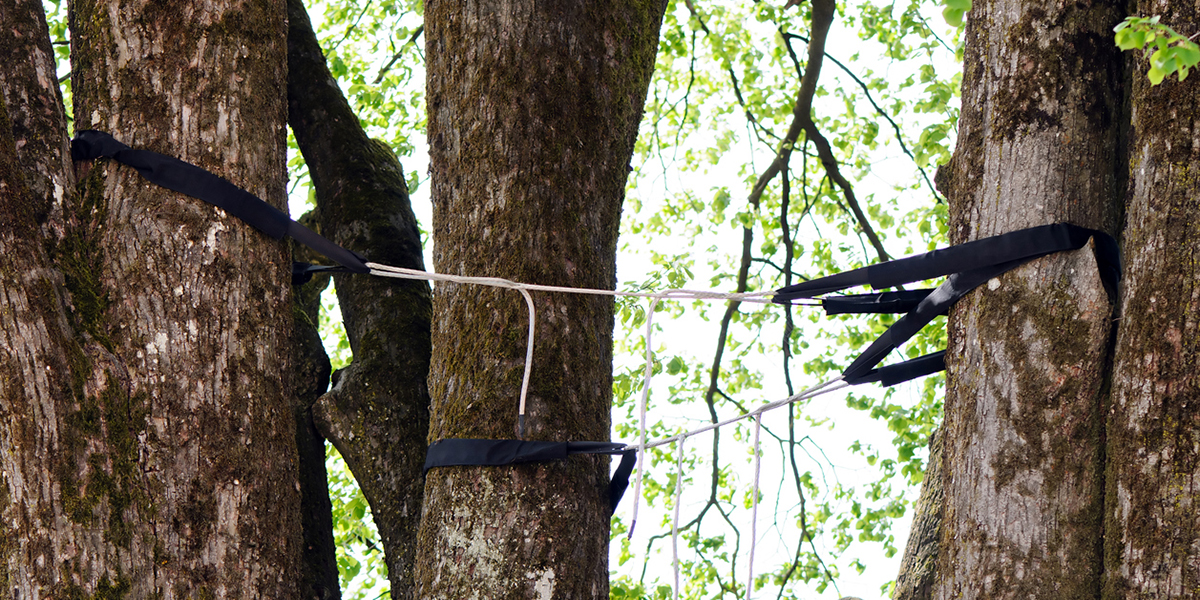 tree cabling services in ct